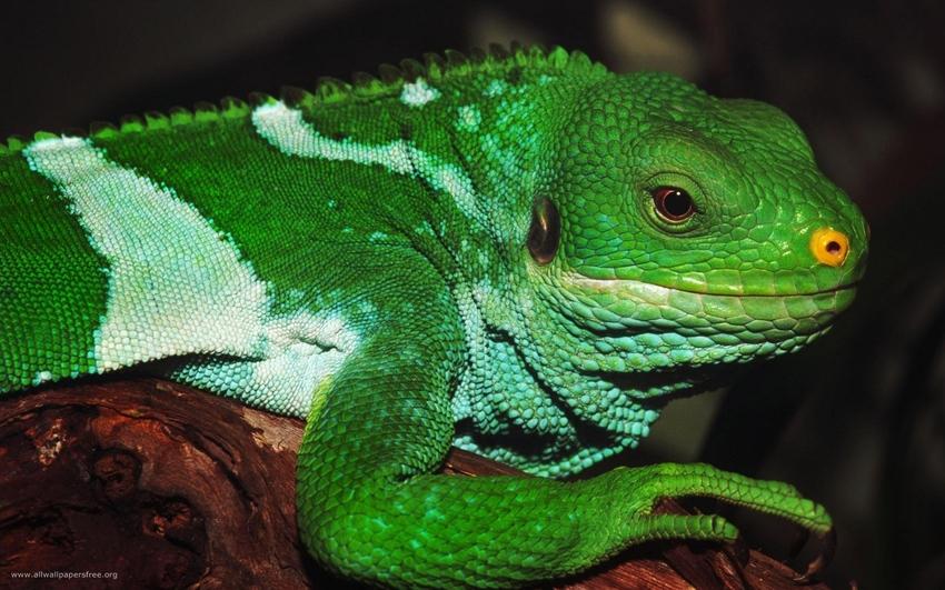 5 images de Reptiles