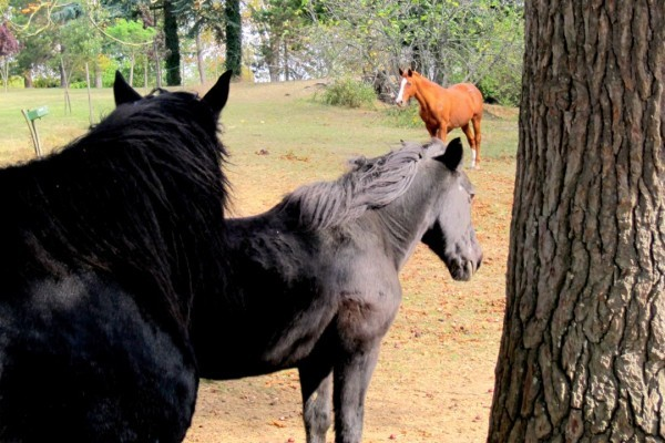 U03 - Les chevaux