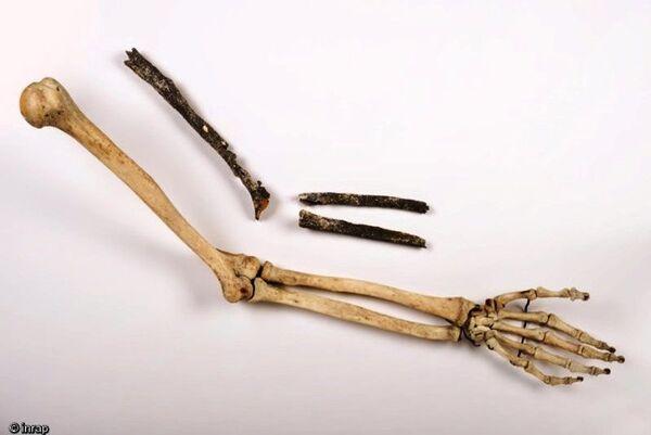 Les trois os longs du bras gauche d'un pré-Néandertalien (humérus, cubitus et radius) retrouvés sur le site de Tourville-la-Rivière (Seine-Maritime) en 2010, comparés à un bras moderne. © Denis Gliksman, Inrap