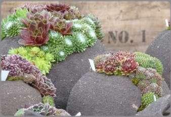 Foire aux plantes d'Enghien