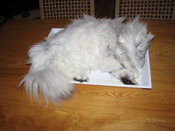Pachou dormait dans un plateau