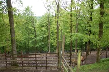 Parc animalier Bouillon 2013 enclos 155