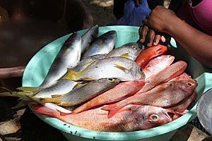sal rei, au marché aux poissons