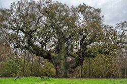 --- Source le Temps.ch - Robin des Bois bataille contre le Gaz de Schiste - image/photo pouvant être protégée par Copyright ou autre ---