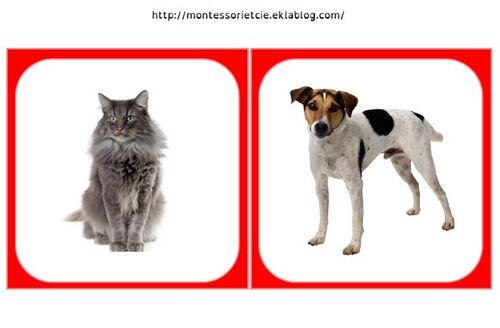 Images classifiées : Animaux de compagnie