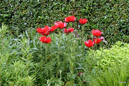 Balade Irlandaise : jardin de Kylemore ... n5bis