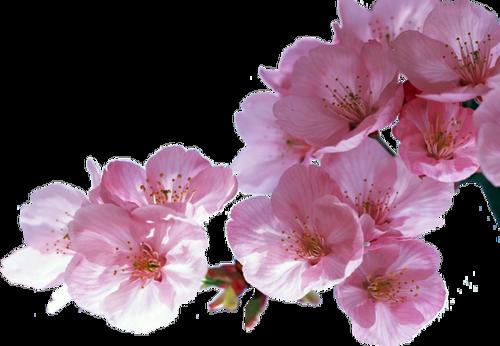 Fleurs (branches) Série 11