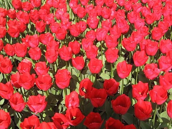 HOLLANDE-2007-022.jpg