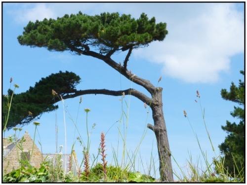 Bréhat ,l' ile des fleurs et des rochers roses
