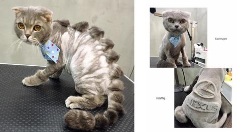 Des oeuvres d'art dans le pelage d'un chat ?