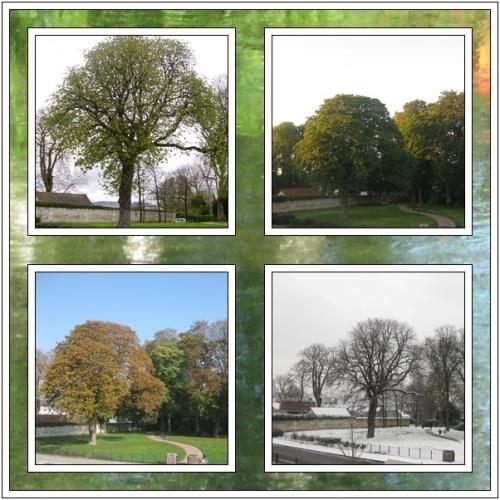 Les quatre saisons du marronnier milfontaines for Les jardins 4 saisons
