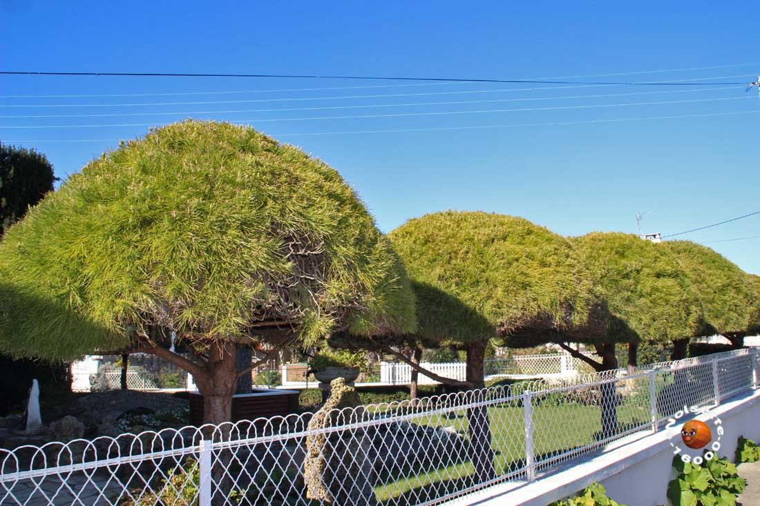 Des arbres bien taillés
