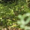 Copie de balade la forêt des heures 024.jpg