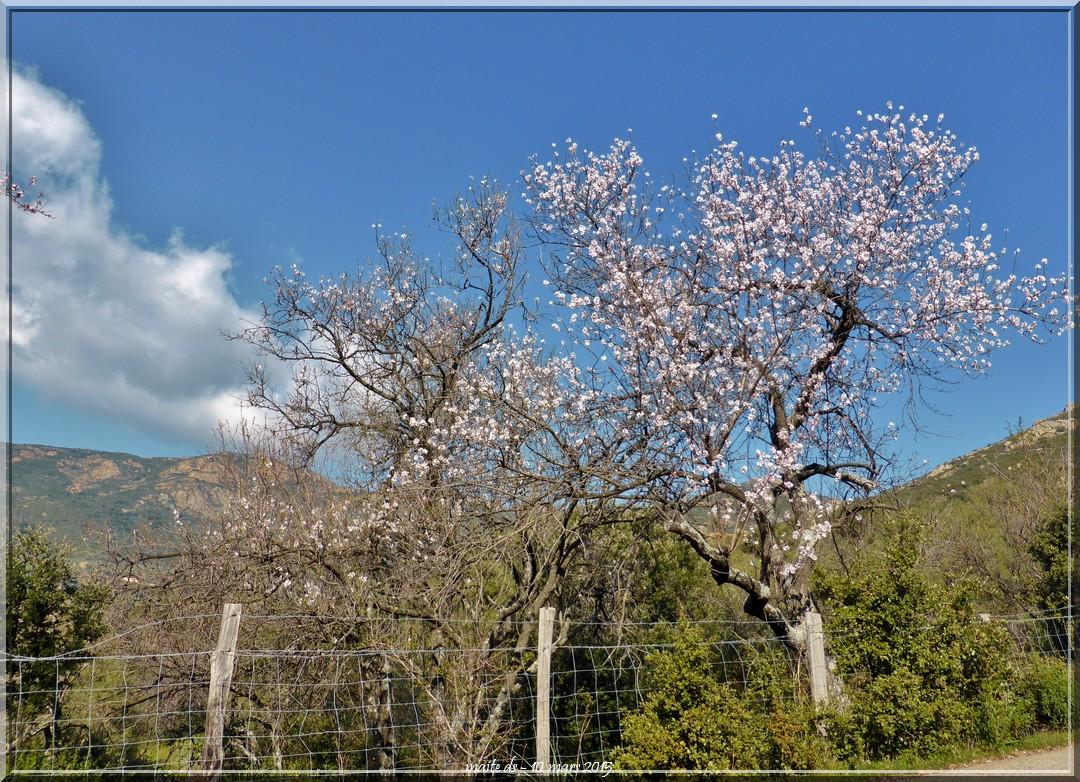 La route fleurie de Galéria à Calvi - Corse