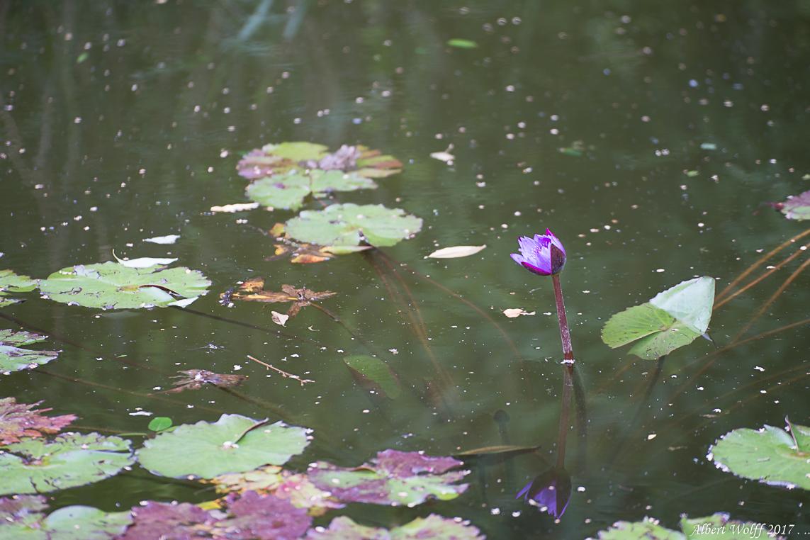 Au pays du lotus - 1 -