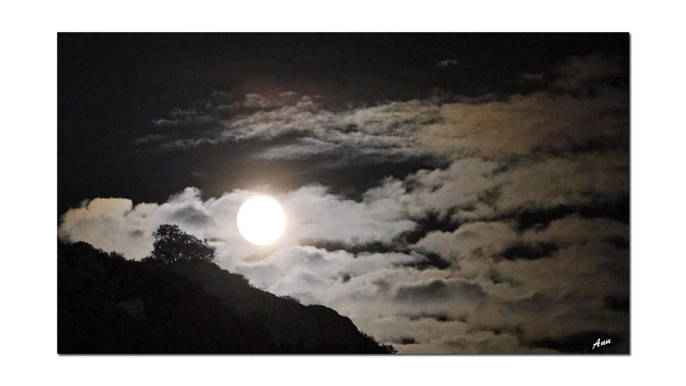 Nuits magiques  Abbaye De Fontfroide (Aude)