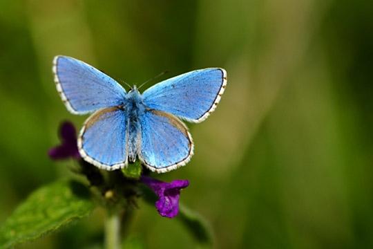 Bleu ...pour l'amour de l'éternité