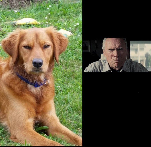 1. A dog looking similar to Vladimir Poutine, it