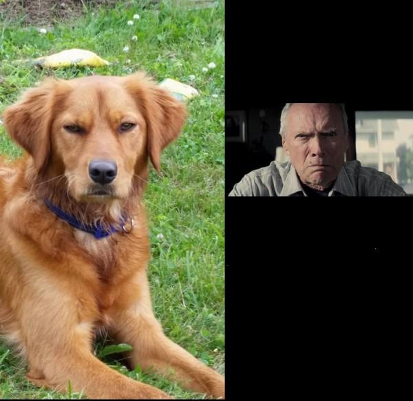 1. A dog looking similar to Vladimir Poutine, it