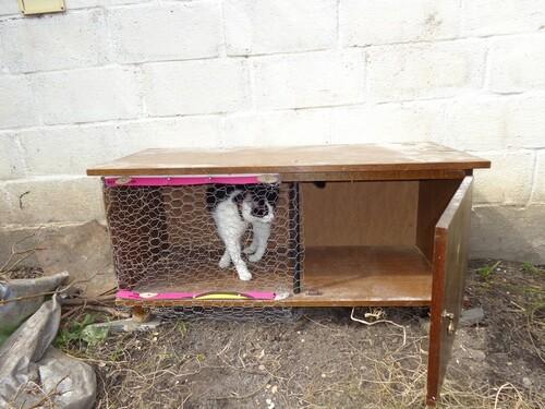 Un abri à canard fait maison