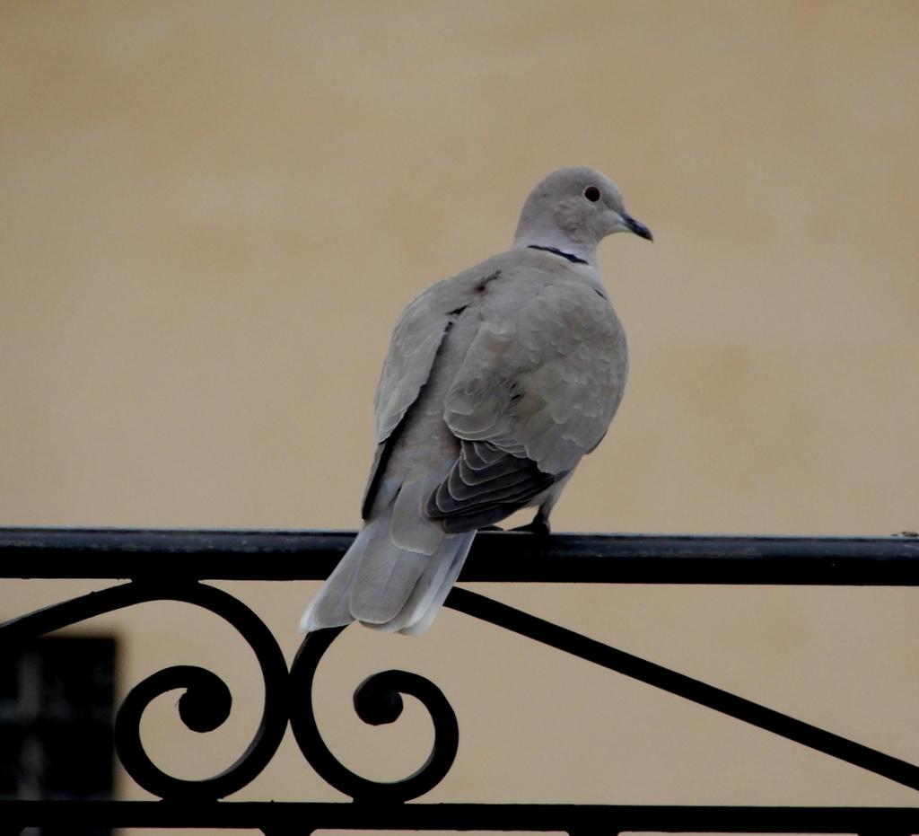 Les oiseaux de ma terrasse!