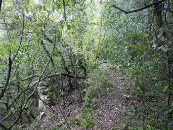 Le sentier vers la source