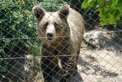 Vlahi dans le massif du Pirin
