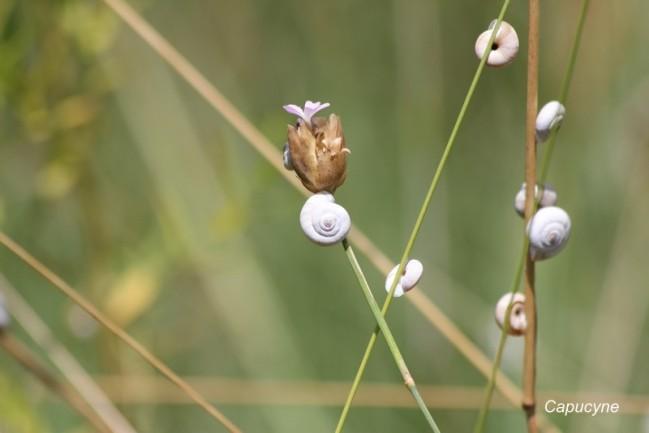 le jardin de cathline (1)