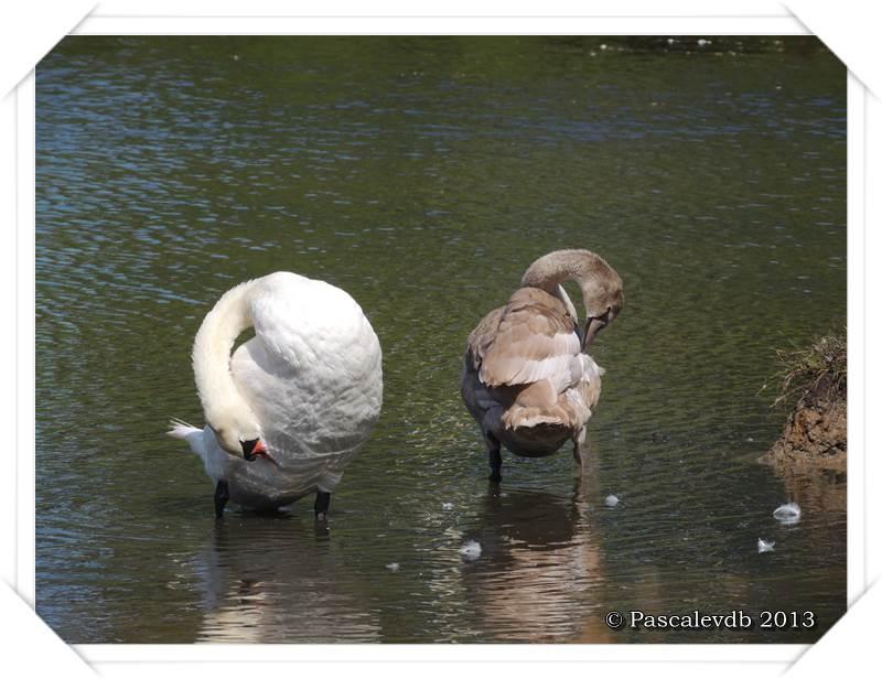 Pause ornithologique estivale au Teich - 12/12
