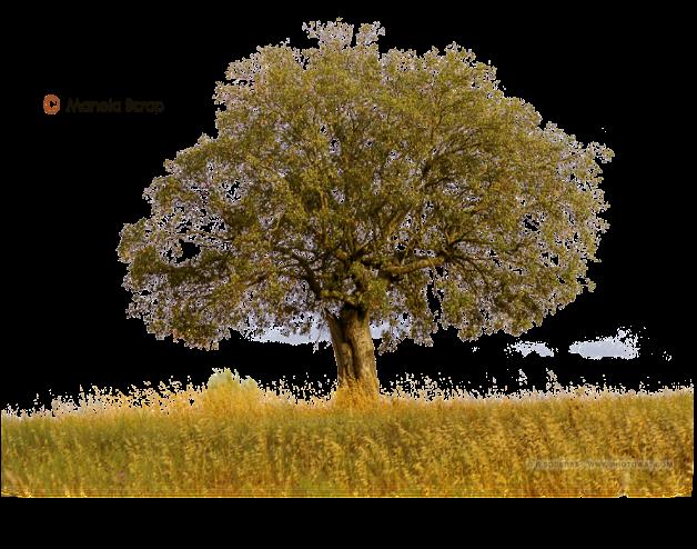 Tubes d'arbres page 1