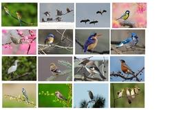 Tableaux d'oiseaux à double entrée