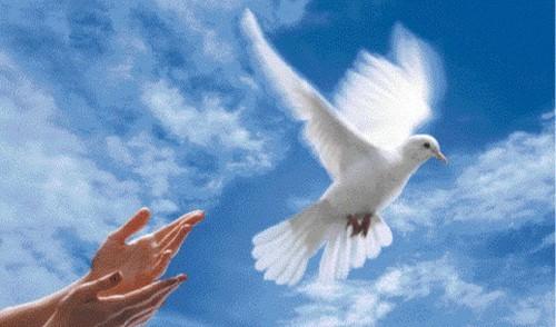 colombe-main