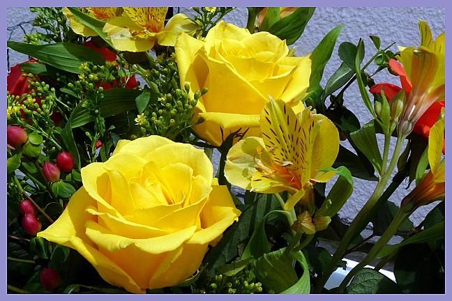 2010-05-19---fleurs.jpg