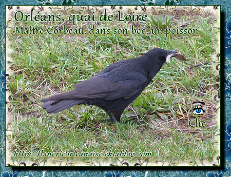 Orléans, Maître Corbeau dans son bec un poisson