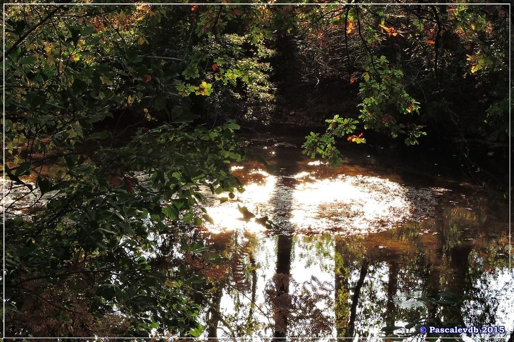 Automne au parc de la Chêneraie à la Hume - Octobre 2015 - 2/7