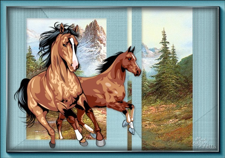 chevaux sauvage