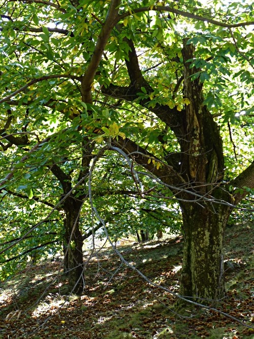 Fête Ardèche Antraigues 9 mp1357 2011