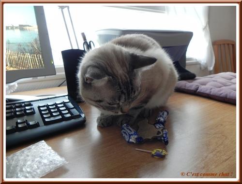 Caline joue sur le bureau