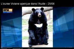 """L'Ourse """"Viviane"""" toujours en fuite !"""