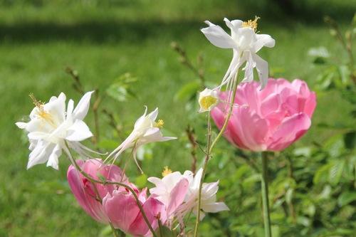 Voici le mois de mai où les fleurs volent au vent