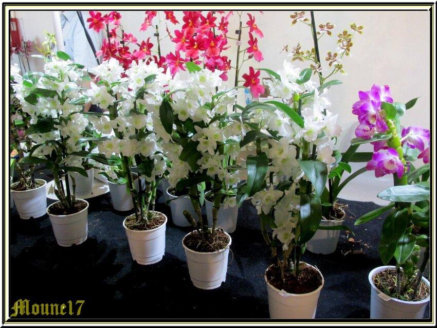 Exposition d'orchidées