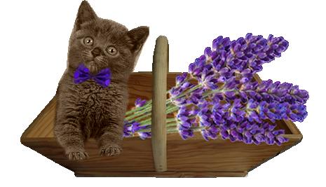 Tubes chatons