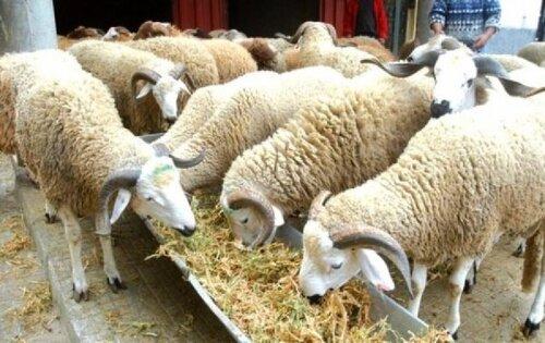 Skhirat : arrestation par la Gendarmerie royale de sept voleurs de bétail