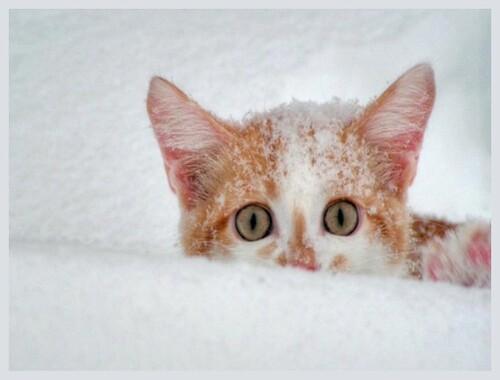 - Retour à la neige
