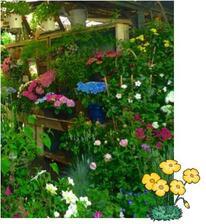 Marché aux fleurs à l'école le jeudi 30 avril 2015 de 16h00 à 17h30