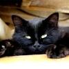 Magnifique ce petit chat non ?