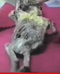 L'humanoïde d'Atacama (Chili)