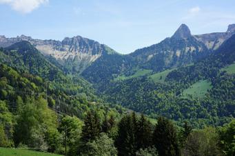 Le Chemin des Narcisses - Les Avants (Suisse)