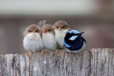 14 photos d'oiseaux