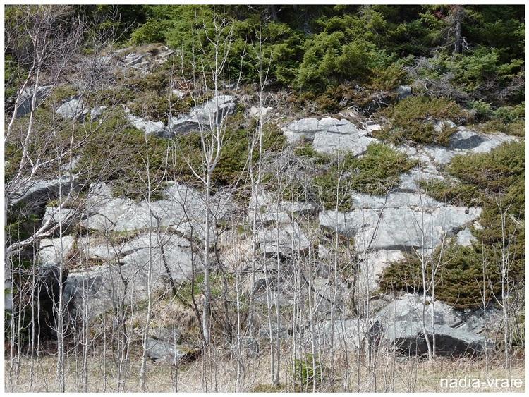 """Roches diverses. (communauté """"Petites et grosses roches, rochers, toutes formes"""" )"""